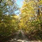 Northwoods Forest