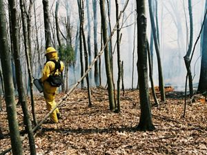 Prescribed fire at our Strait Creek Preserve at the Edge of Appalachia