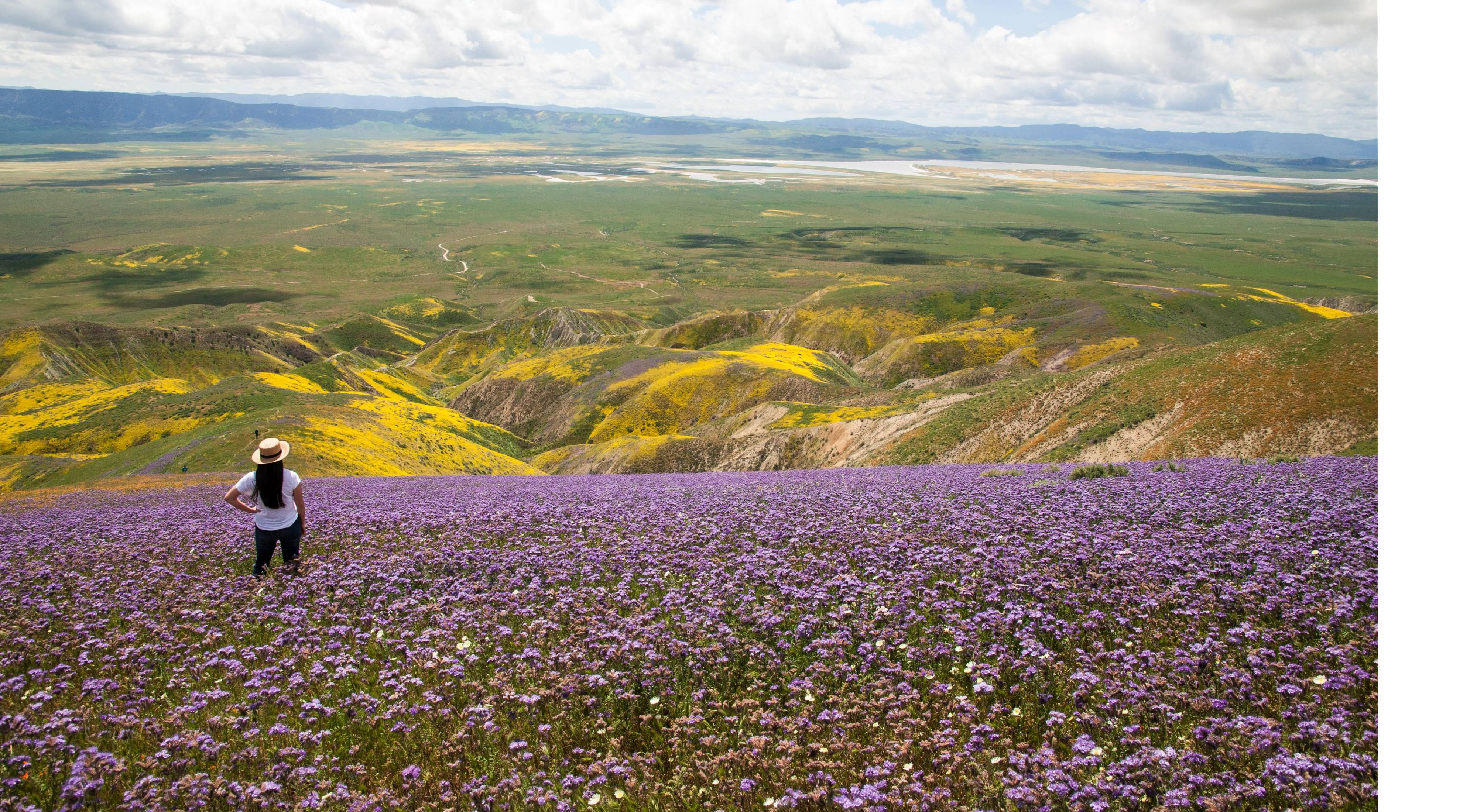 Hiker overlooks a super bloom in Carrizo Plain National Monument.