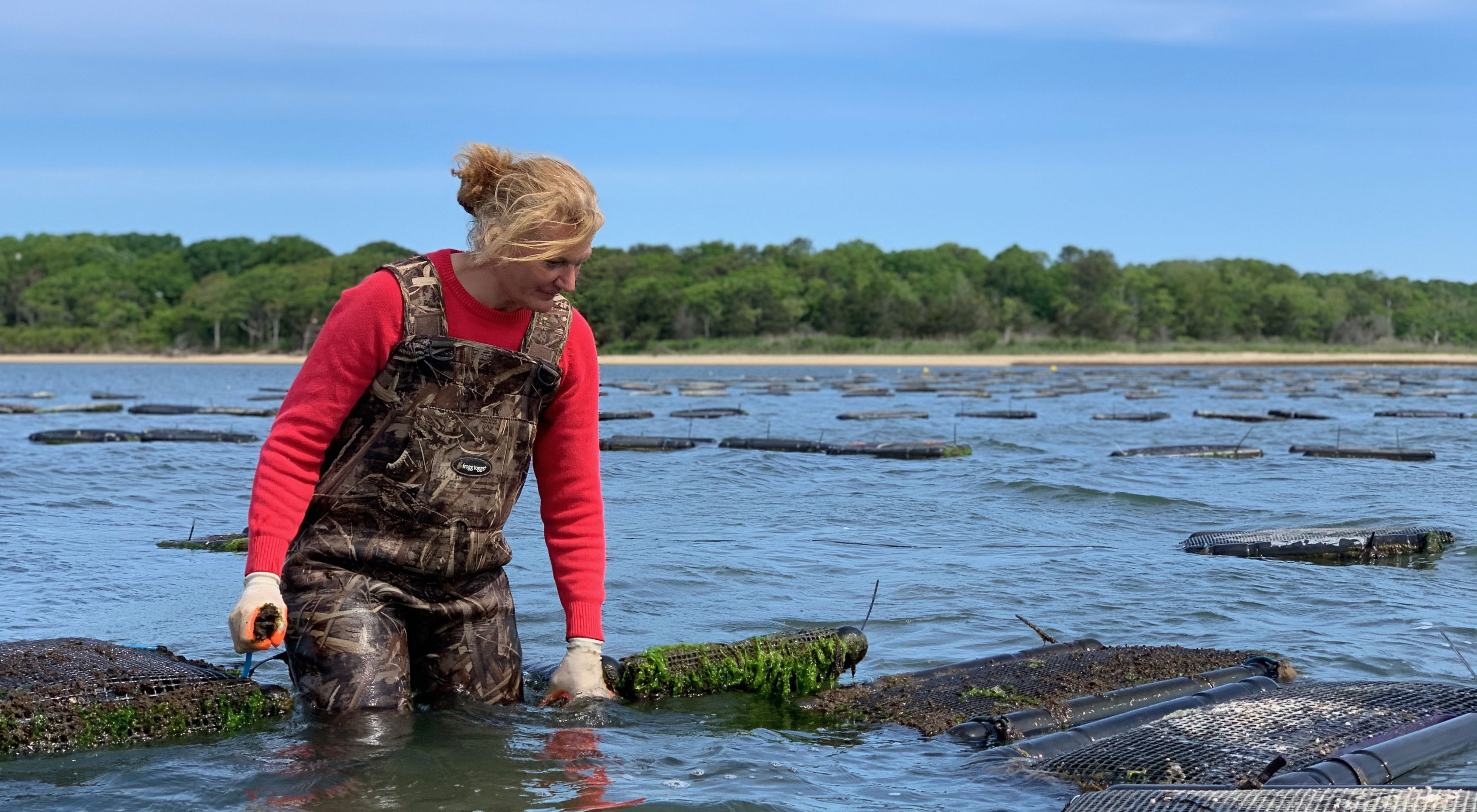 Woman on left side of screen wearing ocean waders and pink long sleeve shirt surveys an oyster cage submerged in water.
