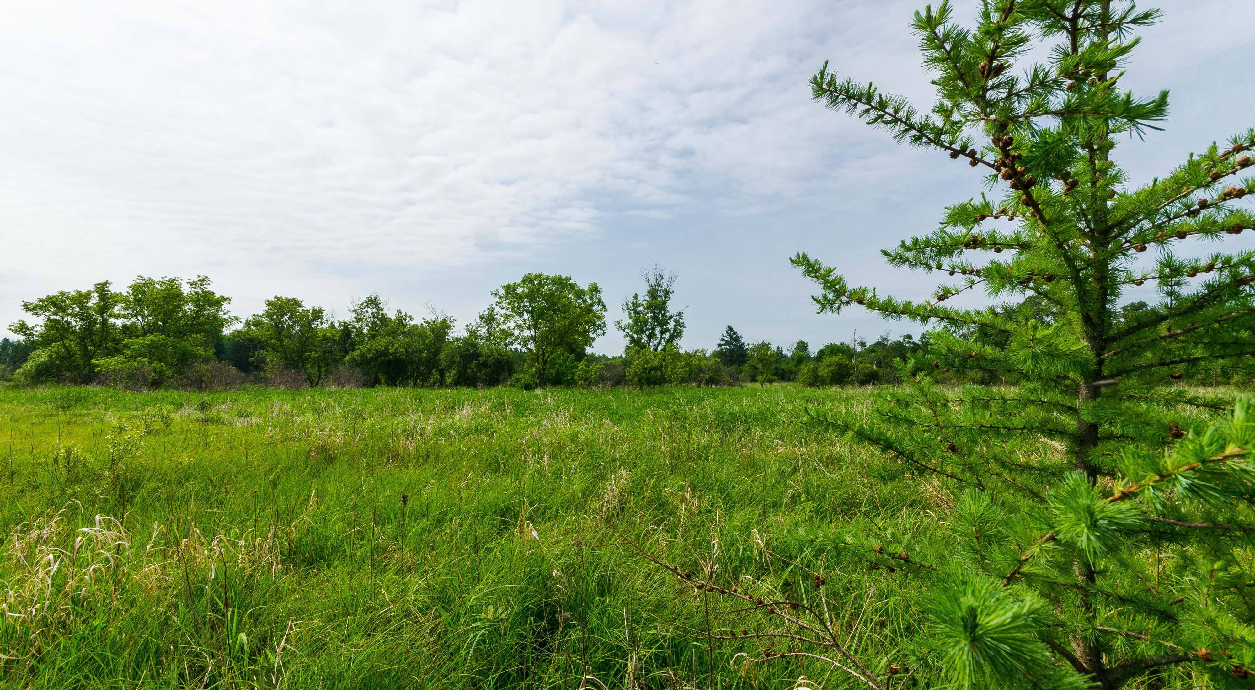 Tamarack and other trees frame the wetlands under a blue sky during summer at the Summerton Bog State Natural Area.