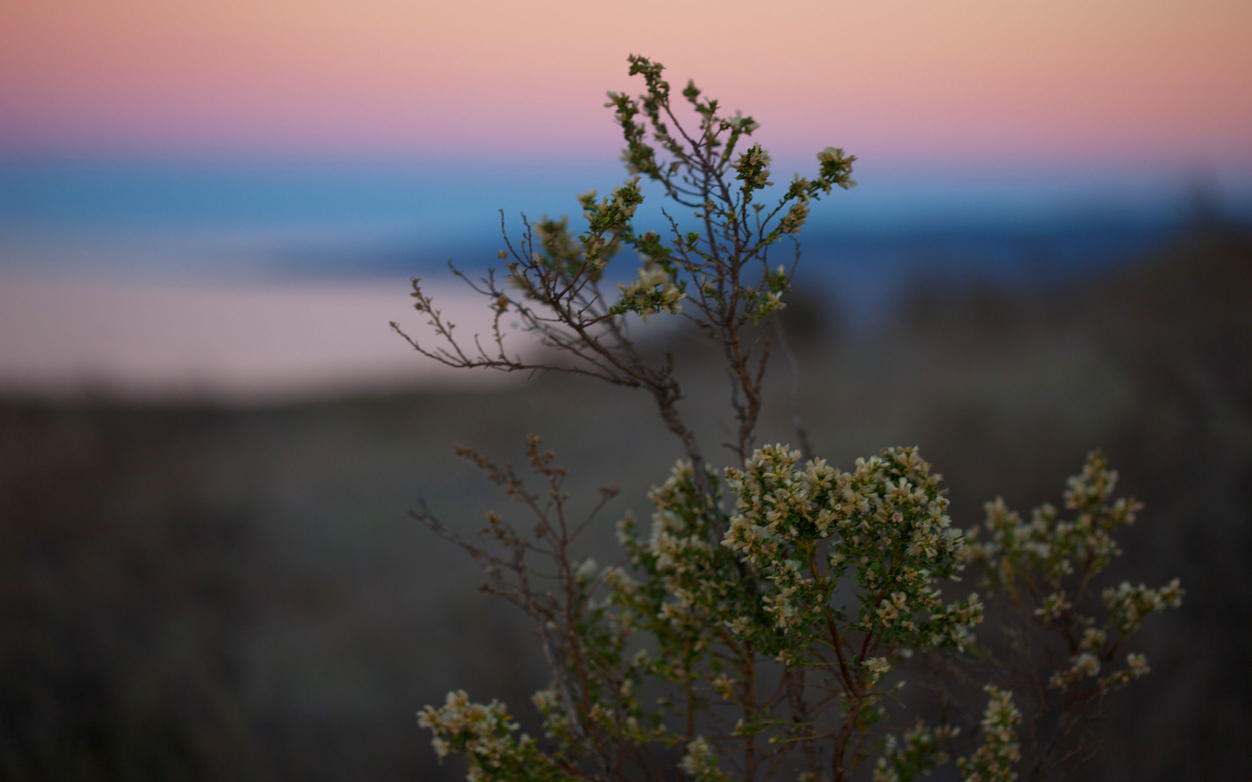 Closeup of a shrub with purple and blue sunset in the sky behind it.