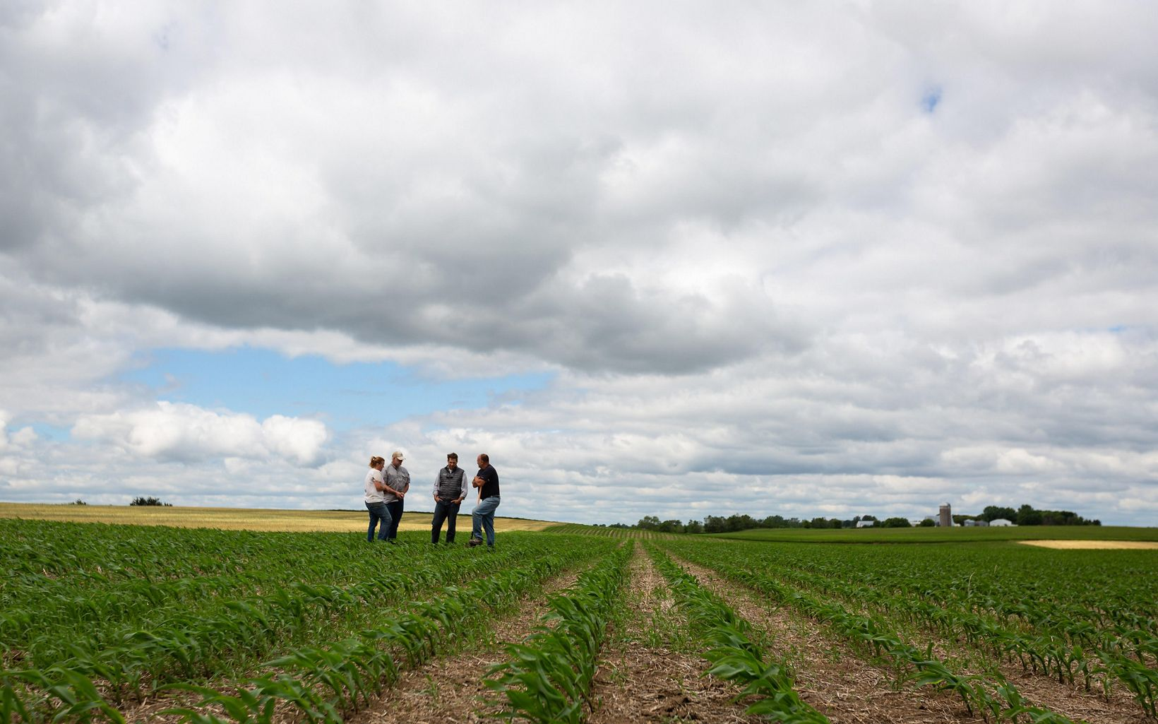 Four people standing in a cover-cropped farm field.
