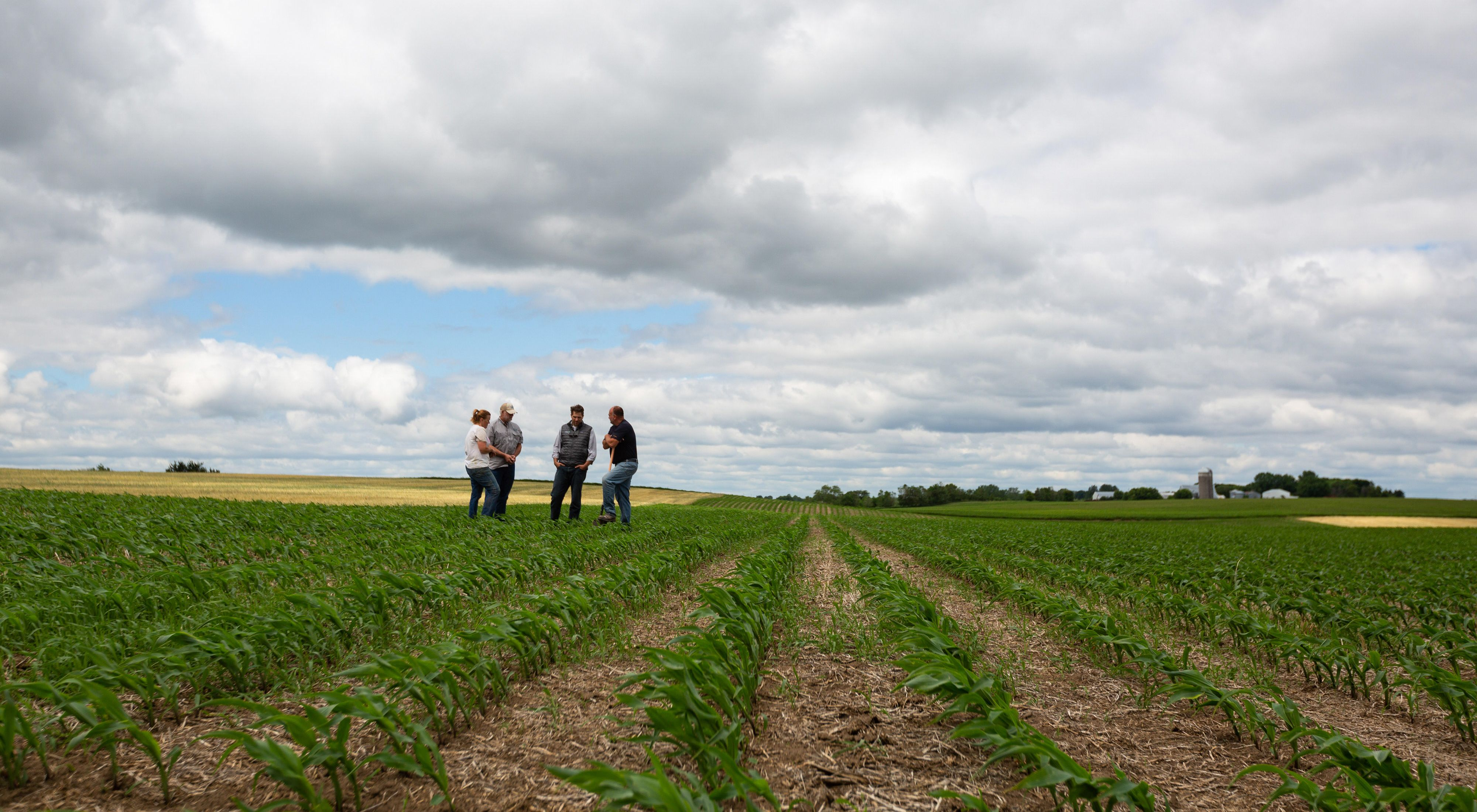 Conservation partners standing in a no-till farm field in Stearns County, Minnesota.