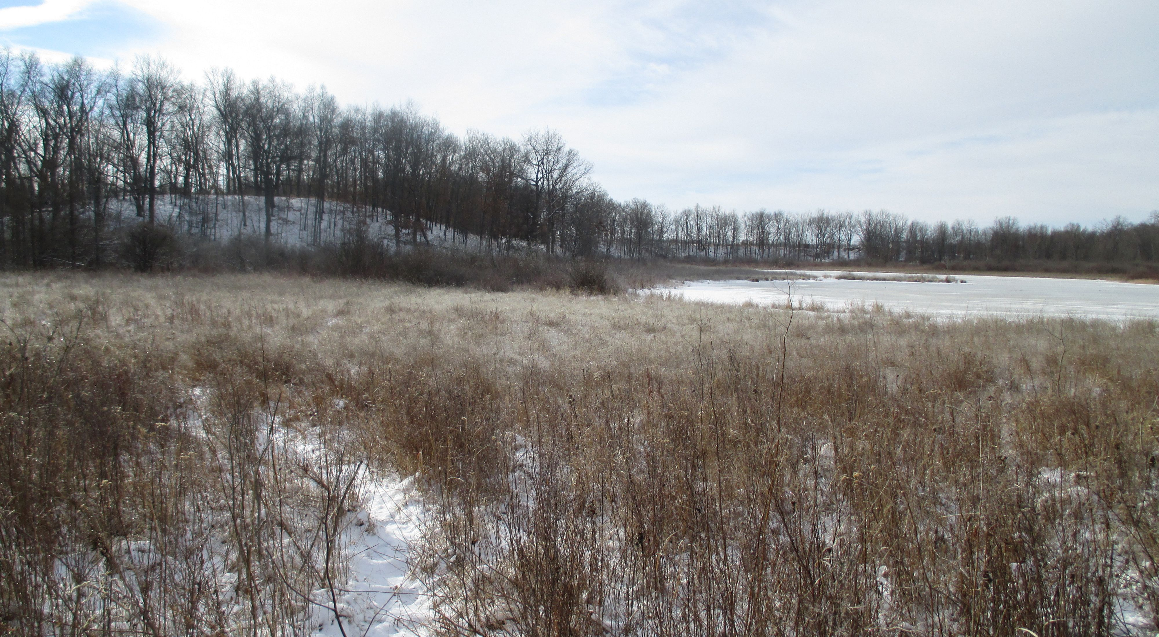 An icy isolated wetland during winter.