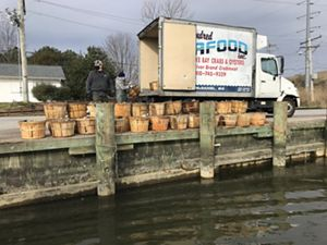 Two men unload bushel baskets full of oysters from a delivery truck onto a boat slip.