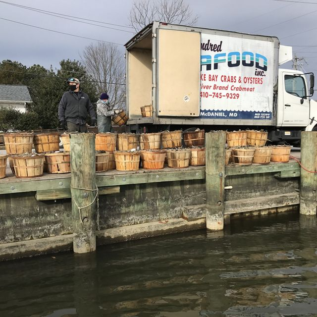 Two men unload wooden bushel baskets full of fresh farmed oysters from a large white panel truck. The baskets are stacked on a dock next to the water.