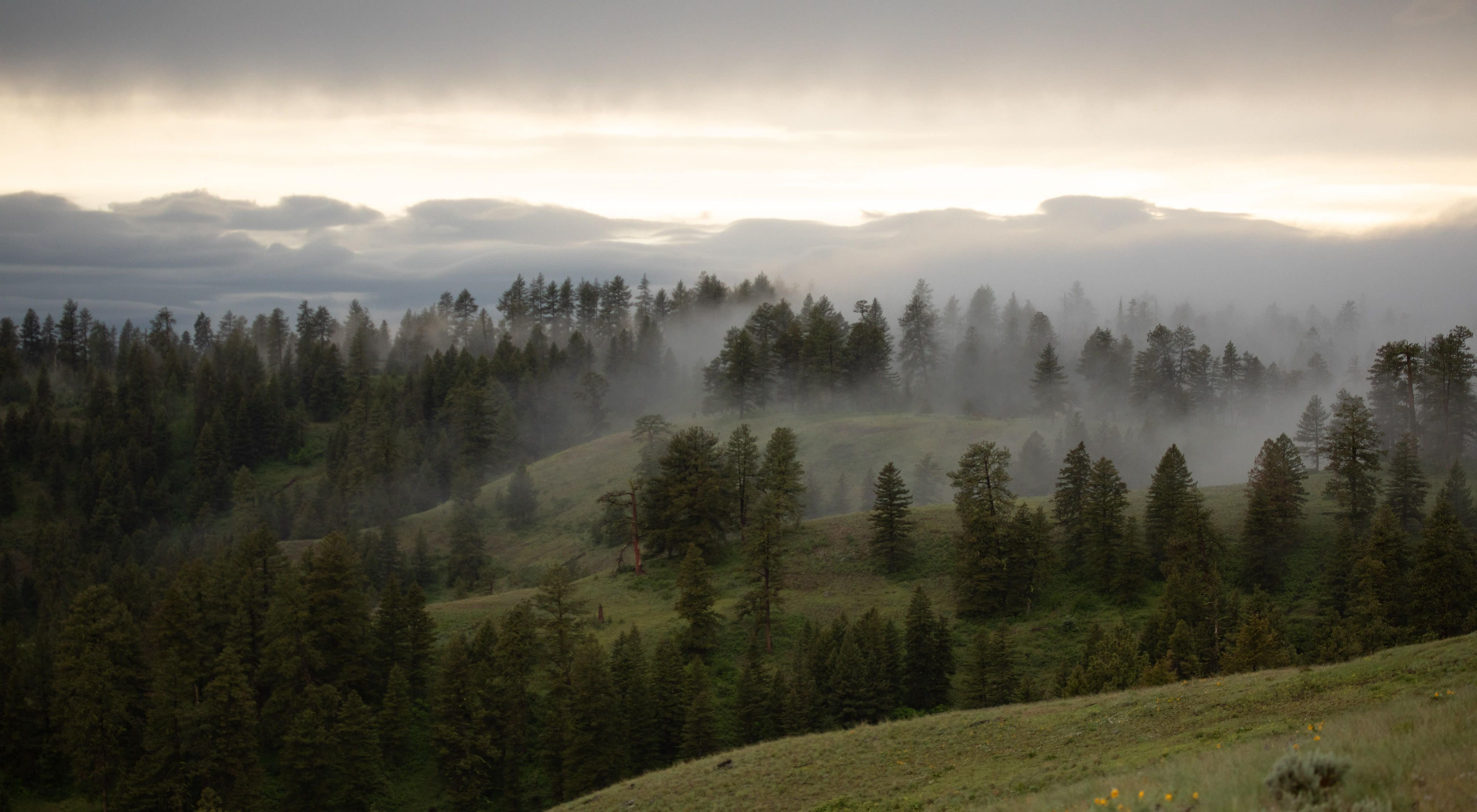 Fog drifts between trees on a hillside with the sun rising in the distance.