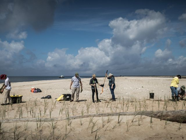 Members of the Conservation Corps on Round Island off Gulfport, Mississippi, planting sea oats, helping to bring life to this manmade island created when the area of dredged.
