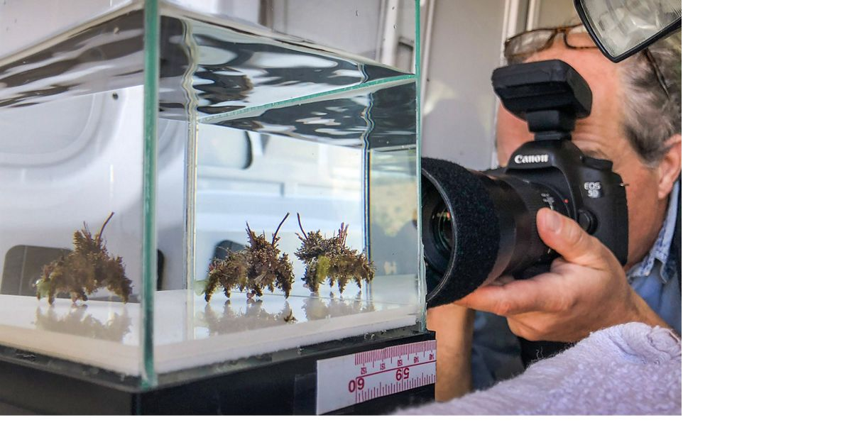 A photographer focuses his camera on a crab in a glass aquarium