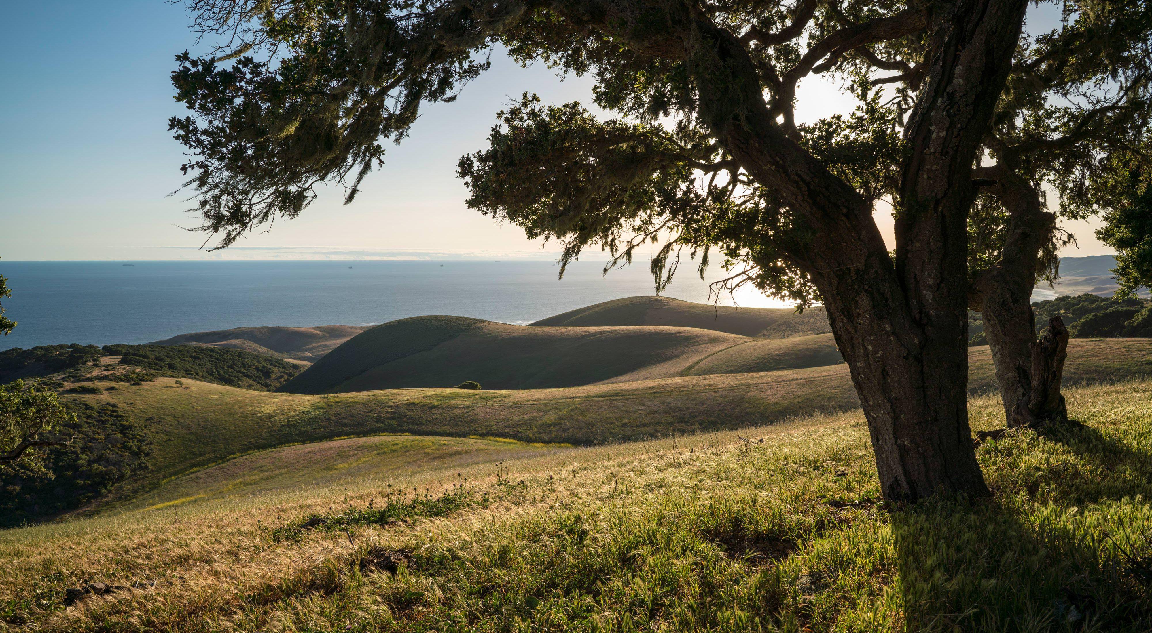 Live oaks frame distant rolling hills