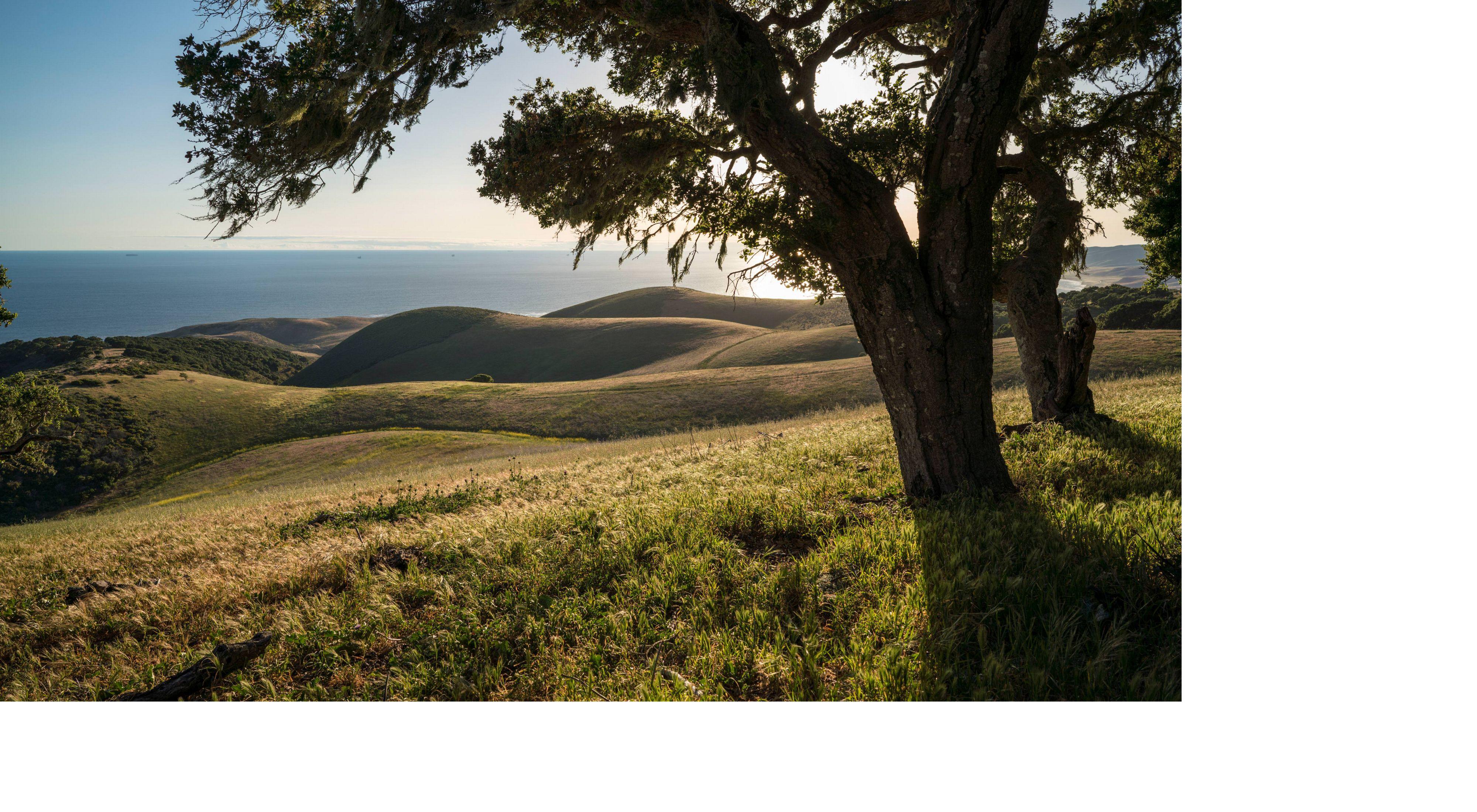 Robles vivos bordean las lejanas colinas onduladas
