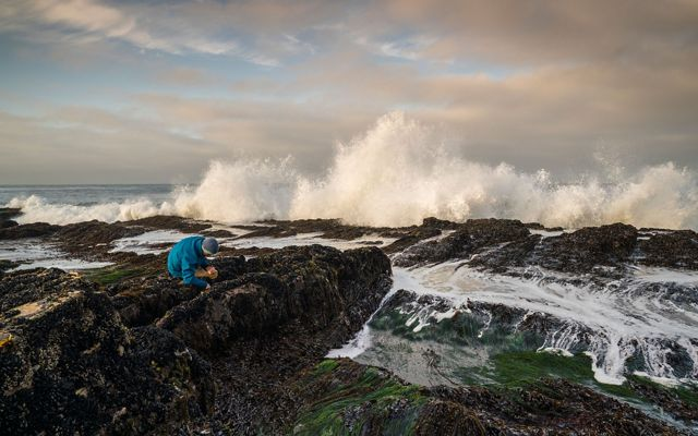 on a rocky shore with waves crashing, an ecologist collects small creatures