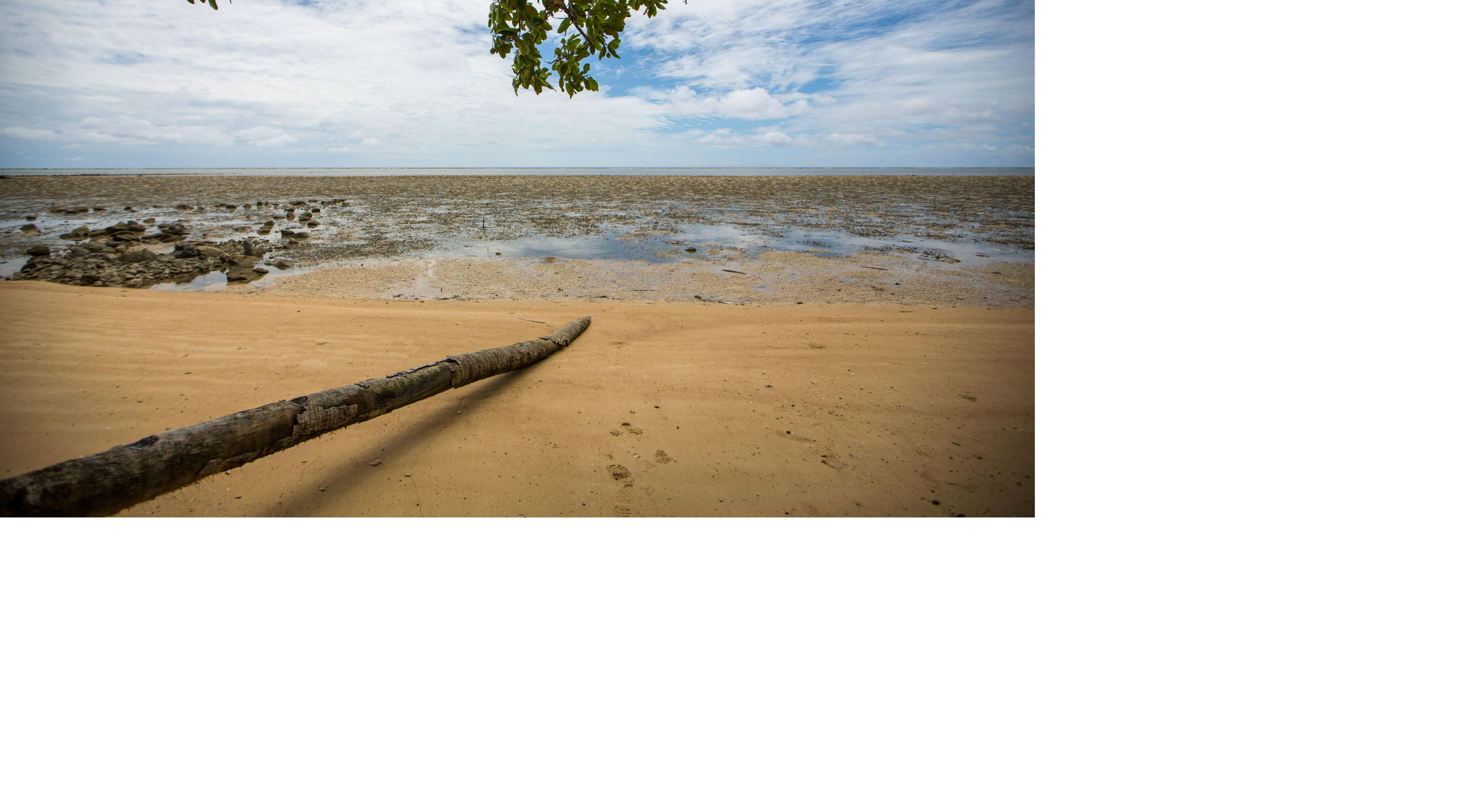A downed palm tree lays across a beach.