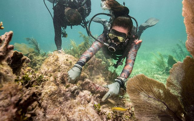 A brigade member practices securing corals to the reef to prepare for repairing reefs following a hurricane in Puerto Morales.