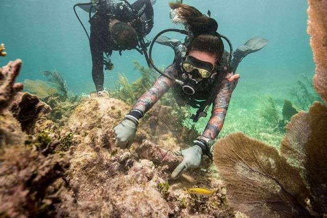 Two scuba divers make repairs to a damaged reef