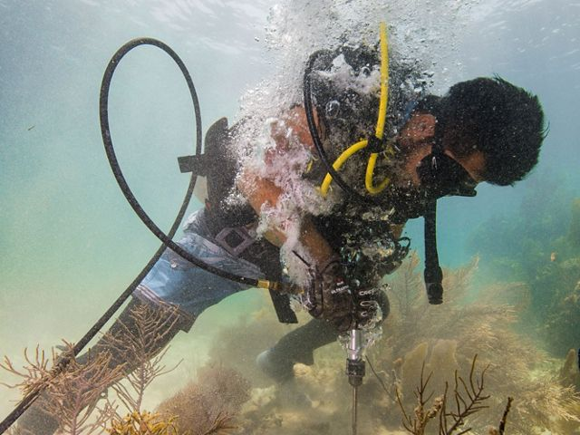 A brigade member learns to use a drill underwater during the second day of coral reef rapid-response training for natural disasters. Following a hurricane, these brigade members would use drills to secure corals to the reef to prepare for repairing reefs following hurricanes. In the Mesoamerican Barrier Reef at Puerto Morelos National Marine Park. Puerto Morelos, Mexico. June 2018.