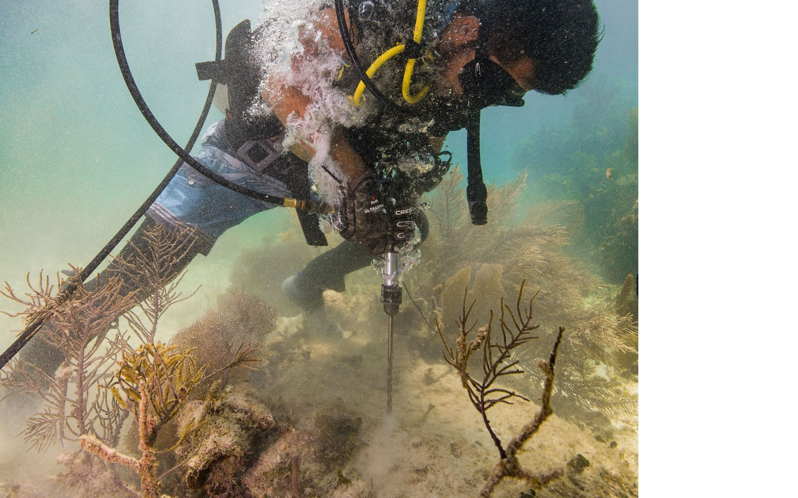 A diver practices using a drill underwater to attach supports that will be used to reattach a piece of broken coral.