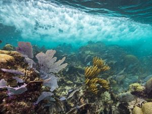 Underwater view of coral reef near Mexico.