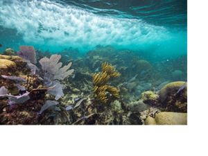 Underwater view of coral reef near Mexico