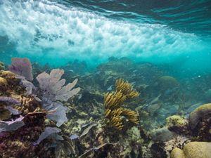 Mesoamerican Reef underwater