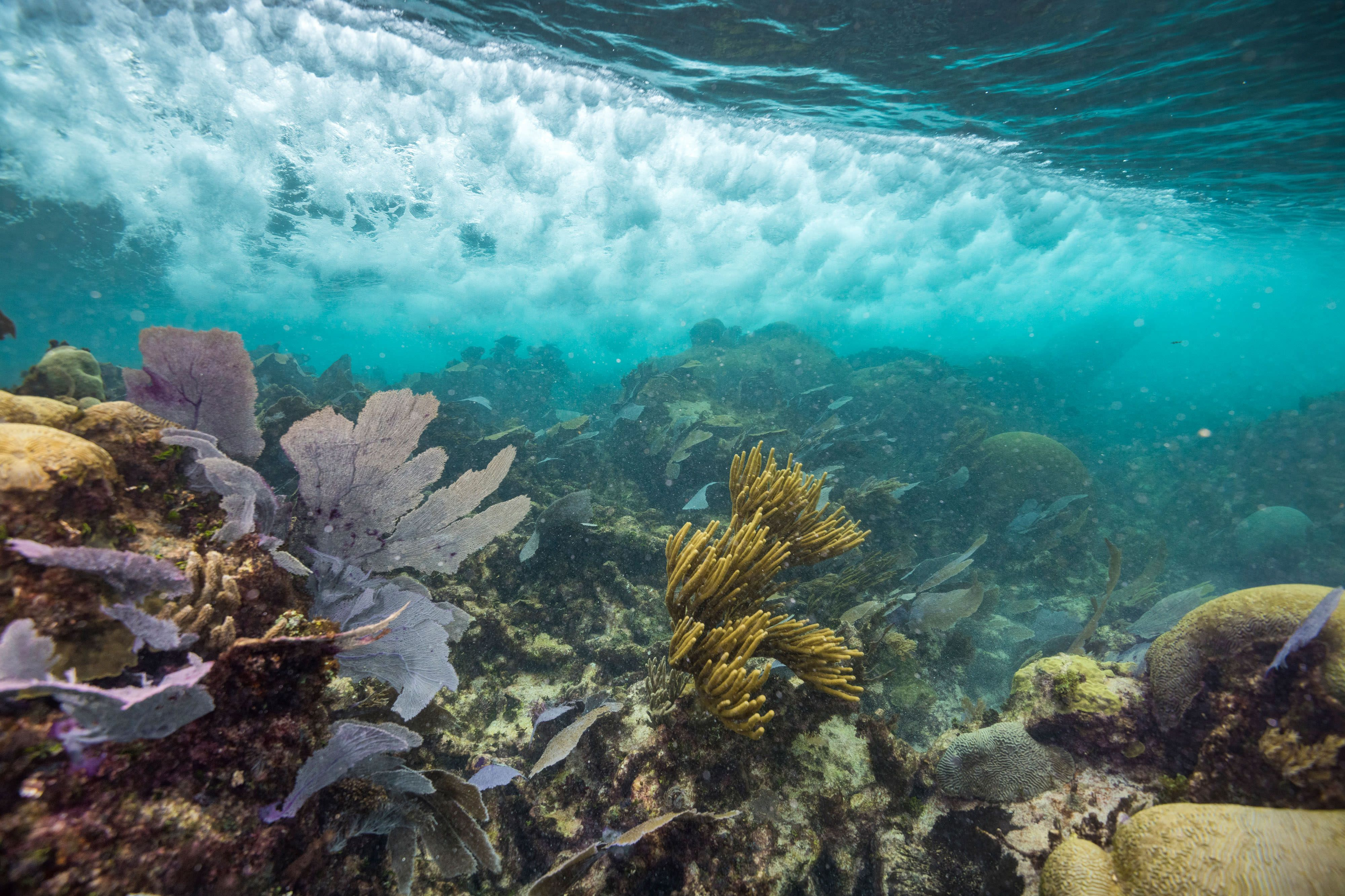 an underwater view of a wave passing over a healthy, colorful coral reef
