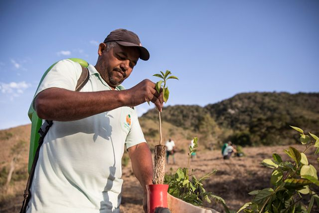 A worker prepares a sapling to be planted in a restoration area of Extrema, Brazil