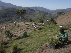 Planting a reforestation area in Extrema, Brazil.