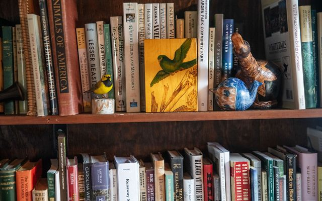 wooden bookshelf filled with birding and birdwatching books and trinkets