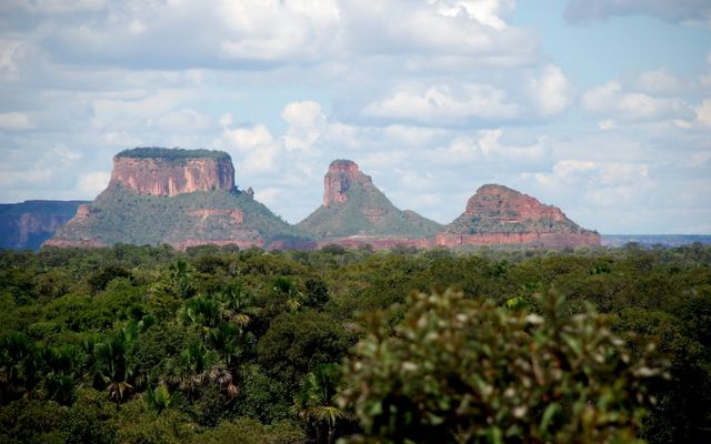 Once a mosaic of forests, savannah and grasslands, fully half of the Cerrado's native vegetation has been converted to cropland and pasture in recent decades.