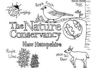 Hand-drawn image of The Nature Conservancy logo, a lady bug, purple finch, white-tailed deer, white birch tree and purple lilac.