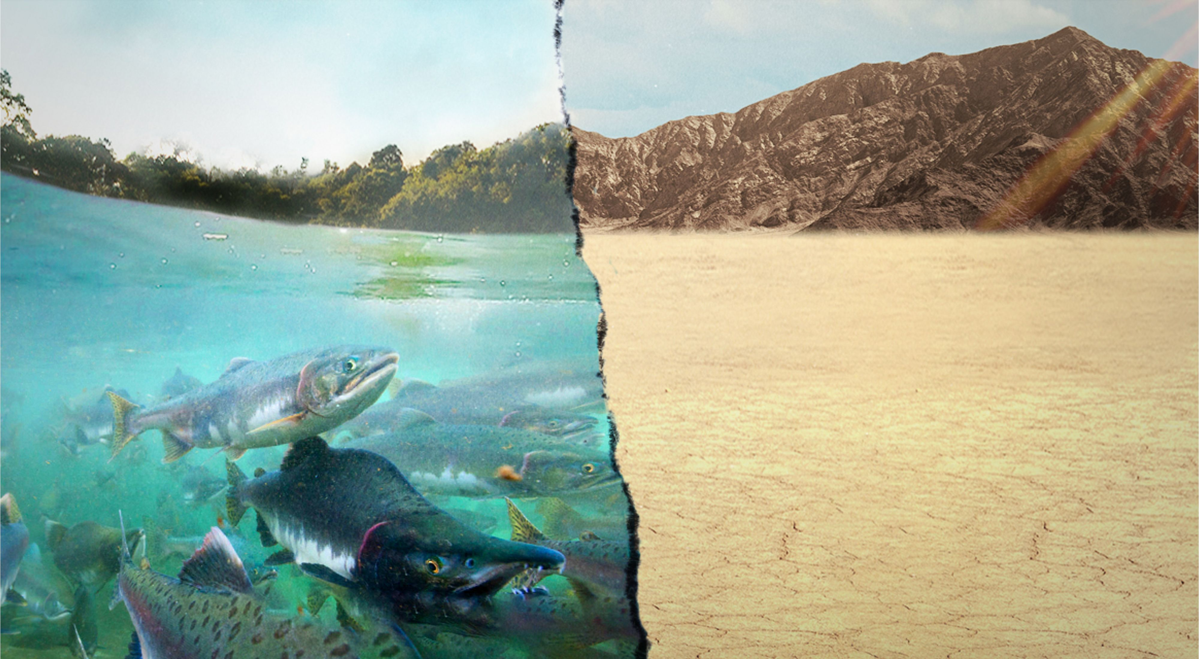 Split image of fish in a river and an empty river bed.