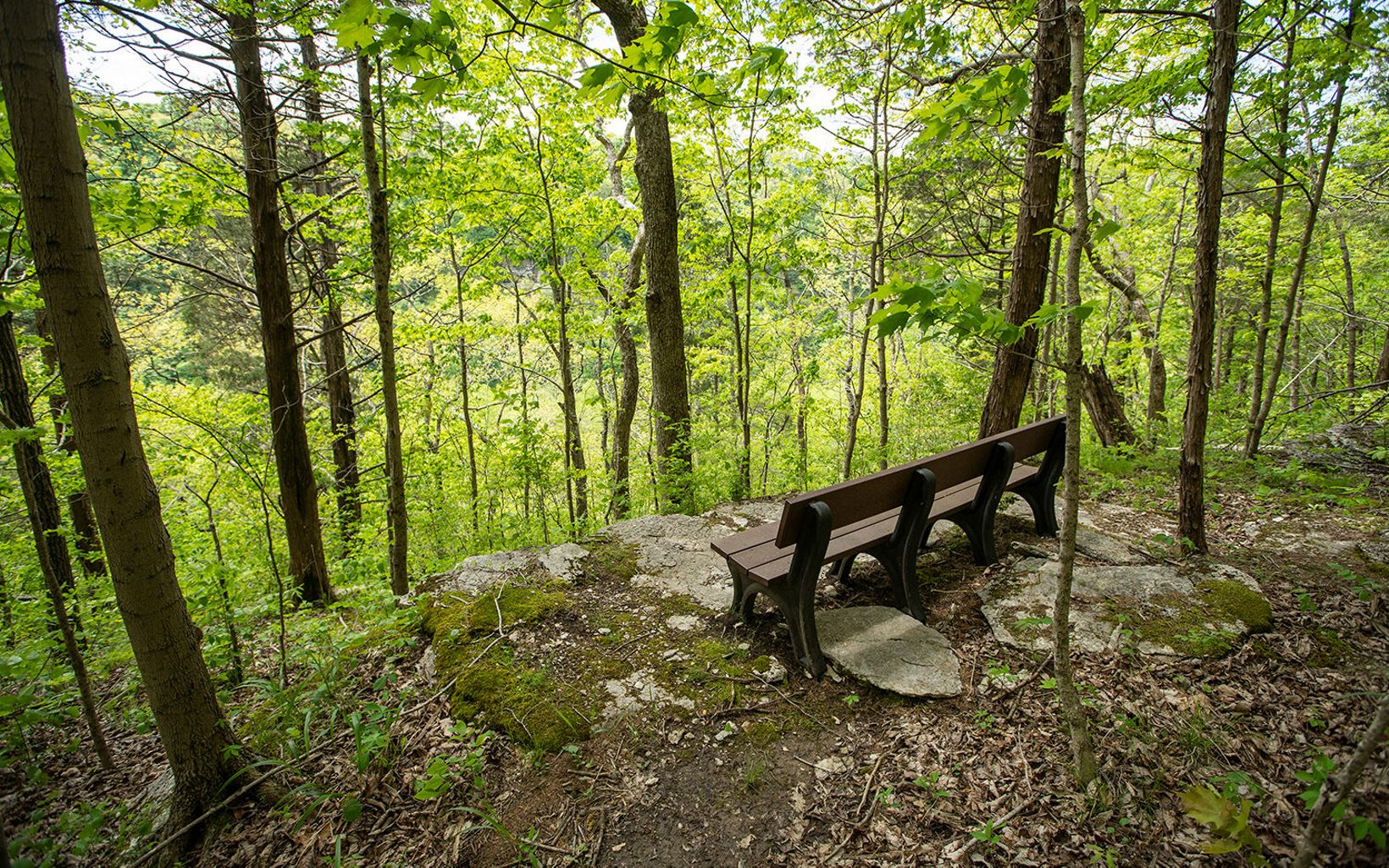 A bench sits at an overlook off the trail.