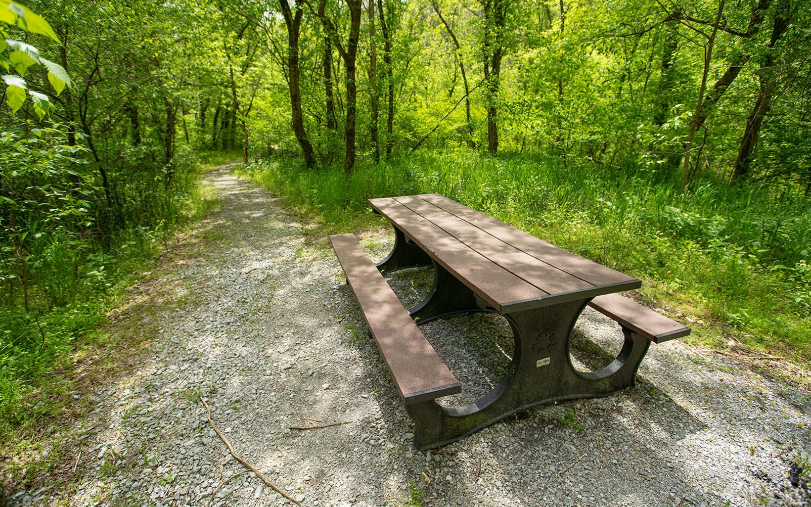 A picnic table sits just off a hiking trail.