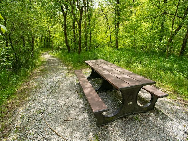 Table in the woods.