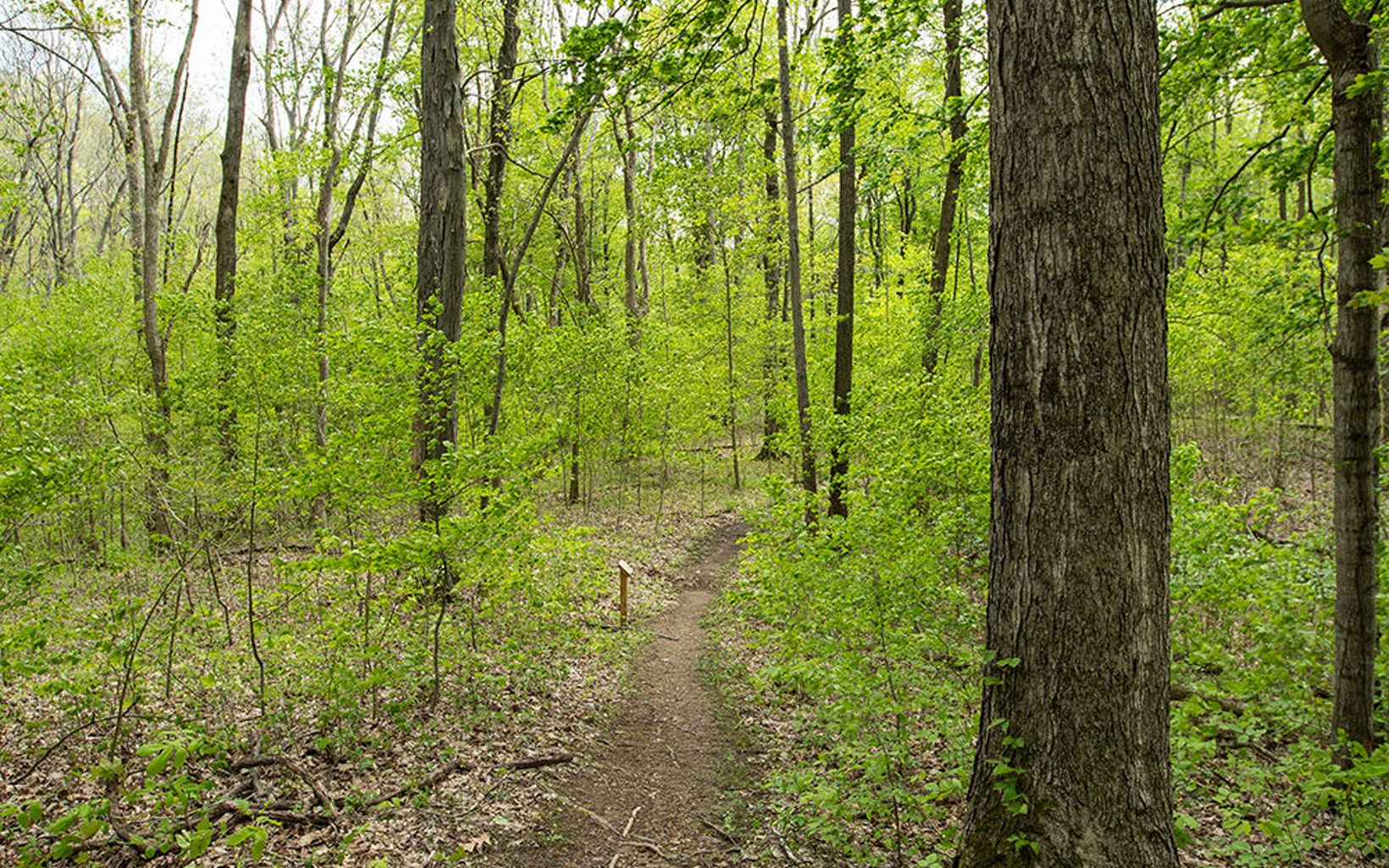 A hiking trail leads through the woods.