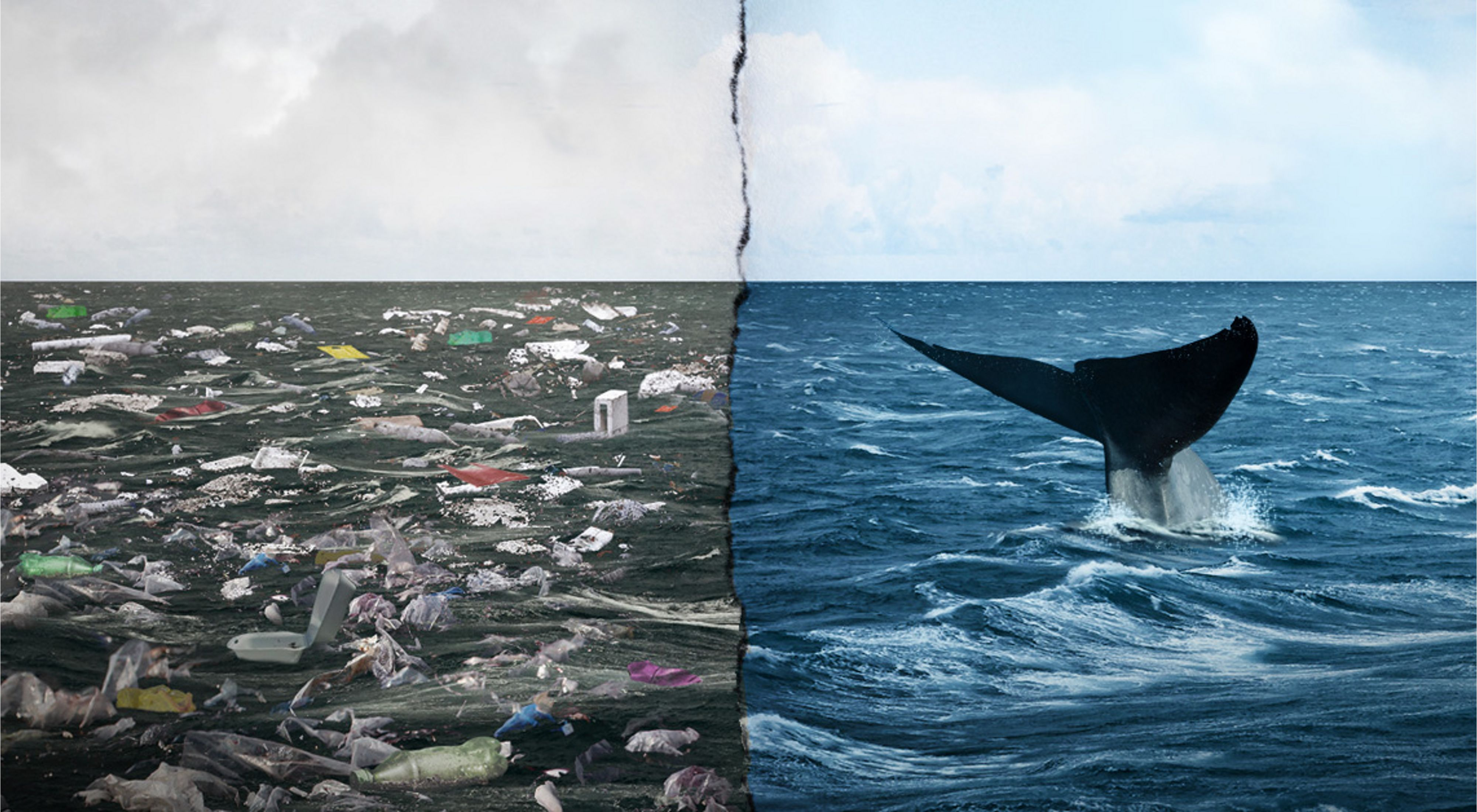Photo collage showing a whale swimming in clear ocean waters and another side with a trash filled, dirty ocean.