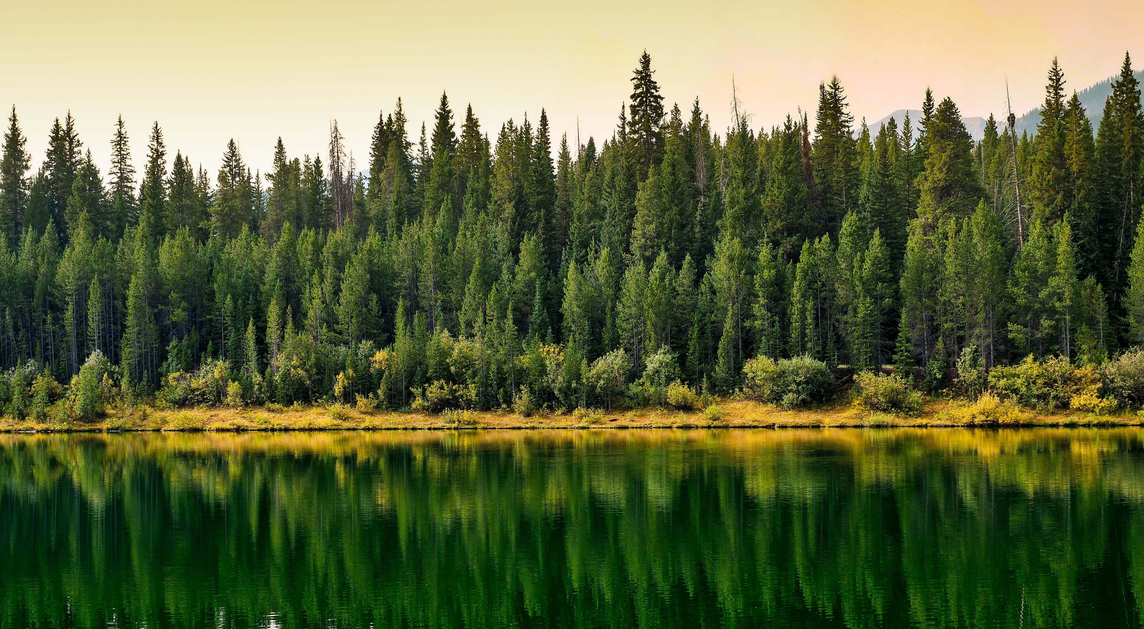 Spruce and Pine Trees Lakeside reflection