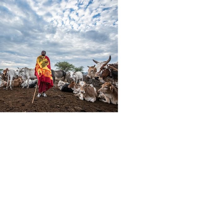 Naronyo Nang'oiho stands with his livestock in Selela, northern Tanzania.