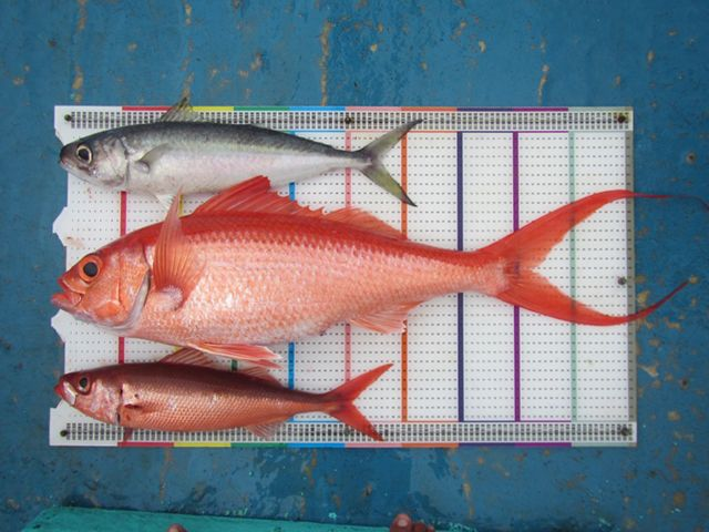 In partnership with TNC, a growing group of seafood companies is helping to put Indonesia's snapper/grouper fishery on a sustainable path.