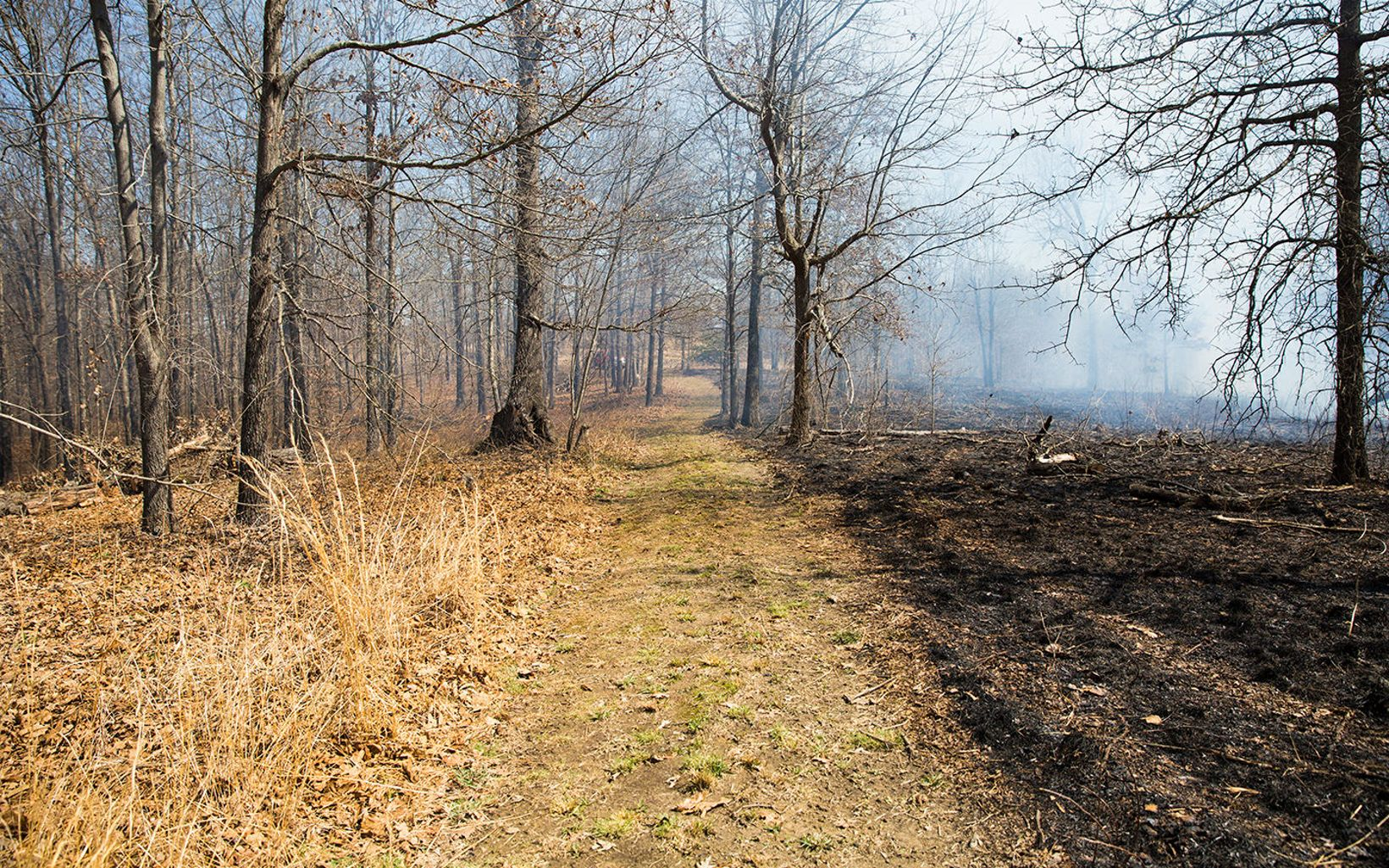 A line of bare dirt separates dry grasses on the left from a black, burned area on the right.
