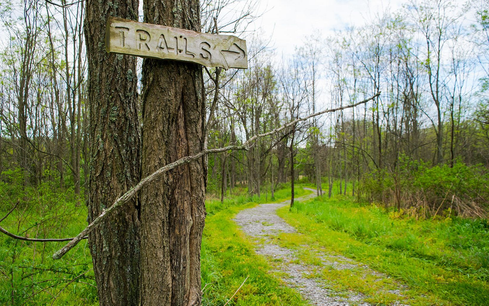 Green grass and trees on either side of a trail with a wooden carved sign in the foreground reading 'trails.'