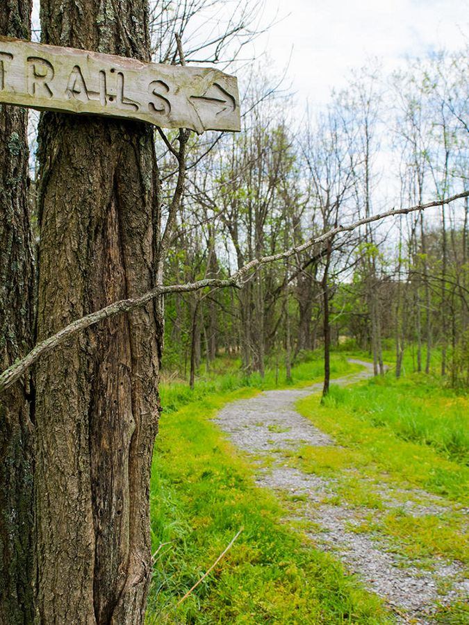 A nature path with trail signage on a tree in front.