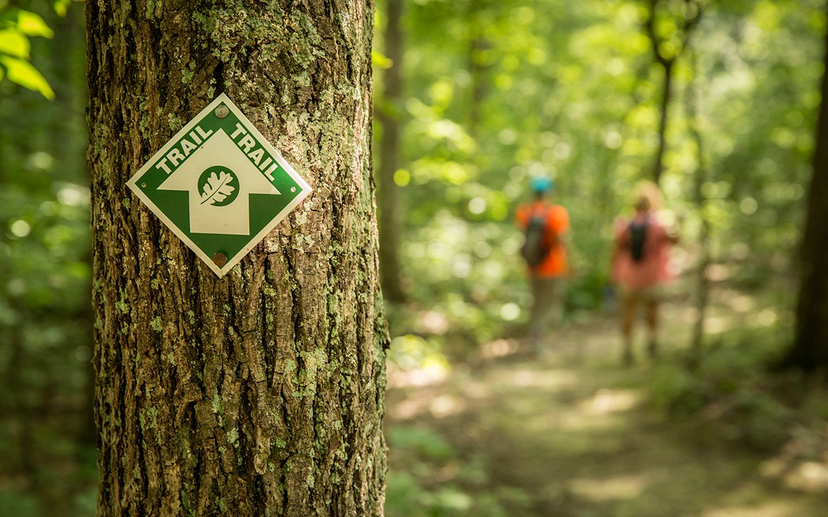 A small trail sign hangs on a tree as hikers walk in the background.