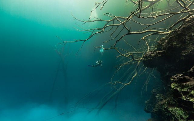 Diver exploring sunken trees amid clouds of particulate matter in Mystic Pool, Cara Blanca Pools, Belize