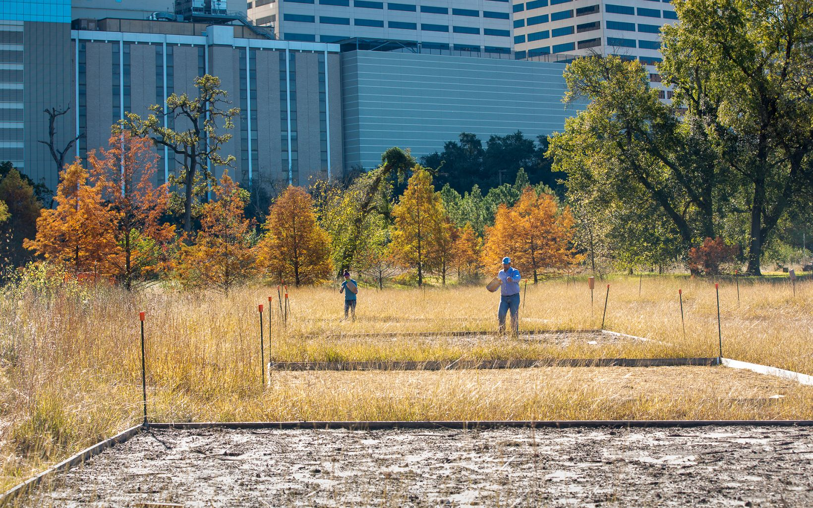 Restoration Projects Director Aaron Tjelmeland plants native seeds at Rice University in Houston, Texas.
