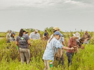 Interns work in the Clive Runnells Family Mad Island Marsh, Texas. This area is part of an expansive coastal wetlands system which, 60 years ago, stretched nearly unbroken along the mid, and upper, Texas Gulf Coast. It lies along the Central Flyway, one of four principal North American migratory bird routes. The preserve's upland prairies represents a portion of the remaining 2 percent of the original tallgrass coastal prairies once found across Texas and Louisiana.