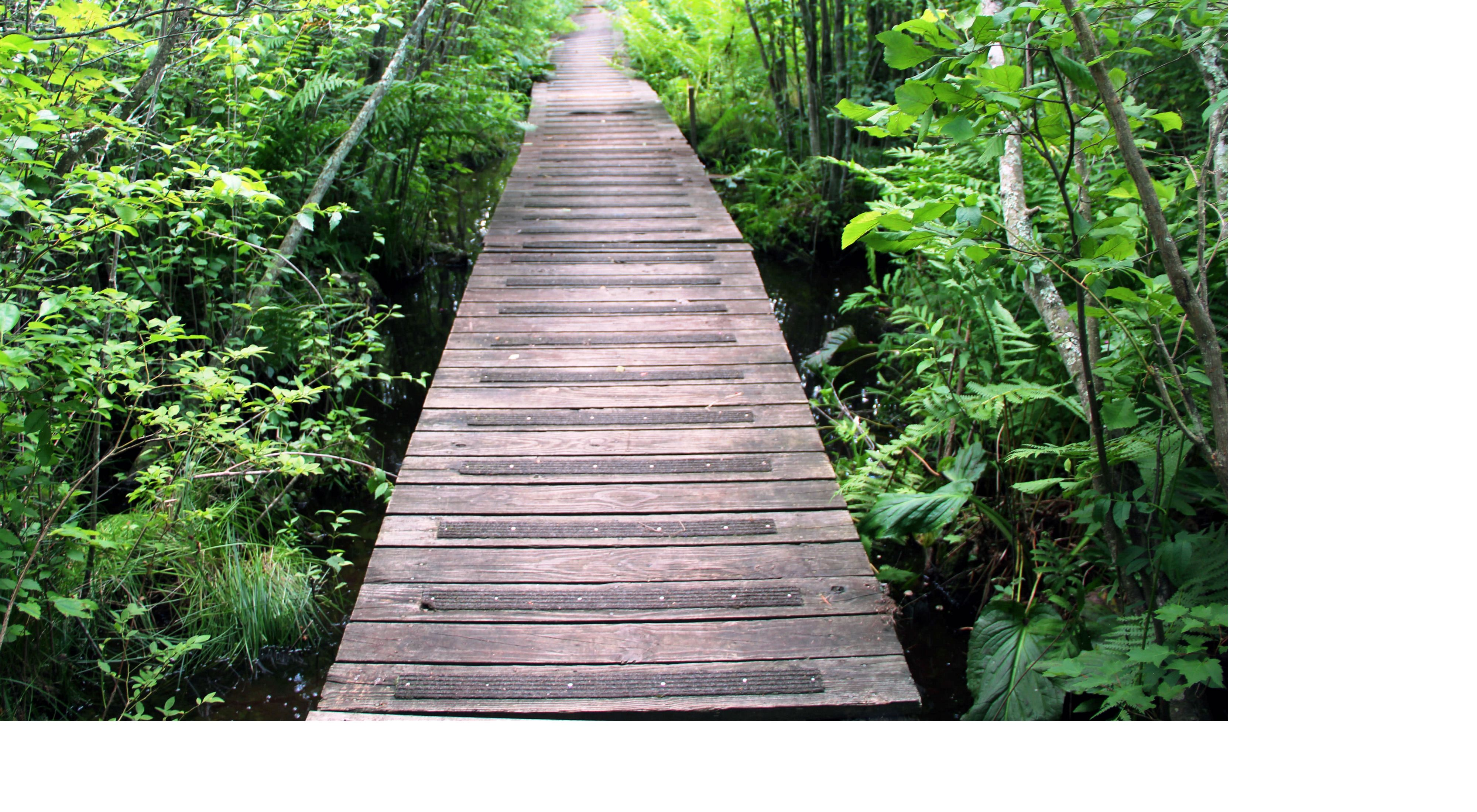Green plants and trees surround a wooden boardwalk.