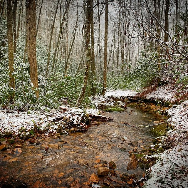 A winter snow dusts the John R. Dickey Birch Branch Sanctuary Preserve in Tennessee's Shady Valley.