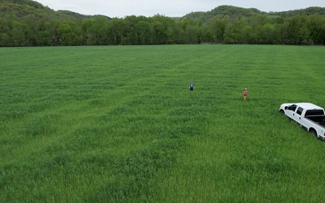 Brothers Matt and Seth Tentis standing in a field of cover crops with a white pickup truck parked nearby.